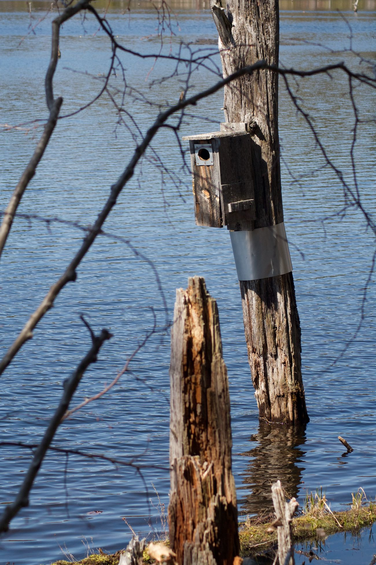 Sweet Trail Beauty In Nature Bird House Nature No People Non-urban Scene Outdoors Rippled Tranquility Tree Trunk Water