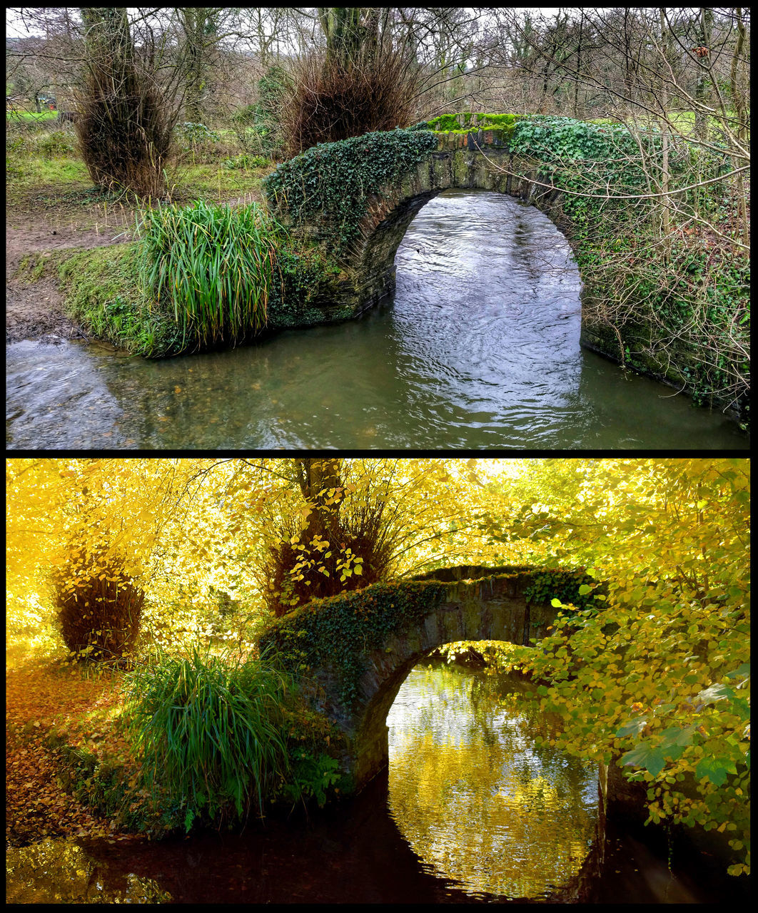 water, nature, river, plant, day, no people, outdoors, tranquility, growth, bridge - man made structure, beauty in nature, tree, architecture, grass
