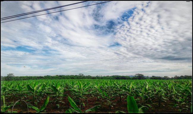 Agriculture Cloud - Sky Rural Scene Sky Field Farm Guácimo