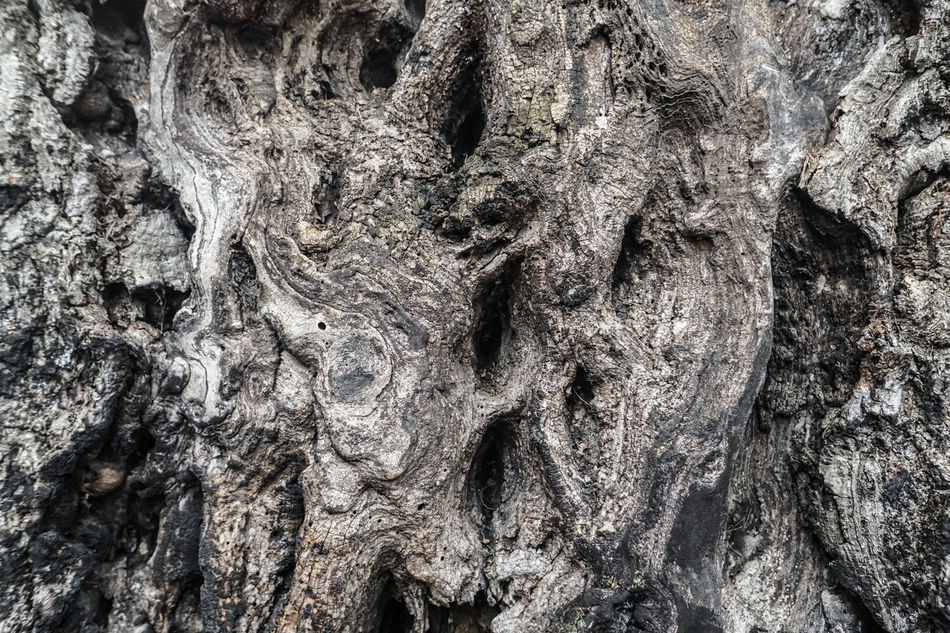 Strange and mystic tree bark / trunk / stem - old and wavy wood texture Backgrounds Bark Bark Texture Close-up Forest Knotted Wood Mystic Nature Odd Old Rough Scary Stem Strange Texture Textured  Textured  Tree Tree Trunk Trunk Unusual Wavy Weird Wood Wooden