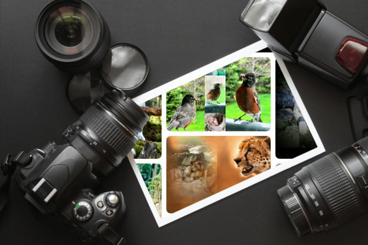 camera - photographic equipment, photography themes, lens - optical instrument, technology, film industry, photographing, old-fashioned, retro styled, photographer, device screen, television camera, movie camera, filming, movie, indoors, close-up, digital single-lens reflex camera, day