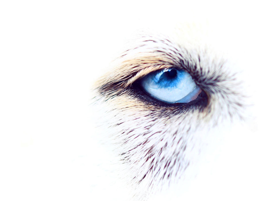 Beautiful stock photos of body piercing,  Animal Themes,  Auto Post Production Filter,  Blue Eyes,  Close-Up