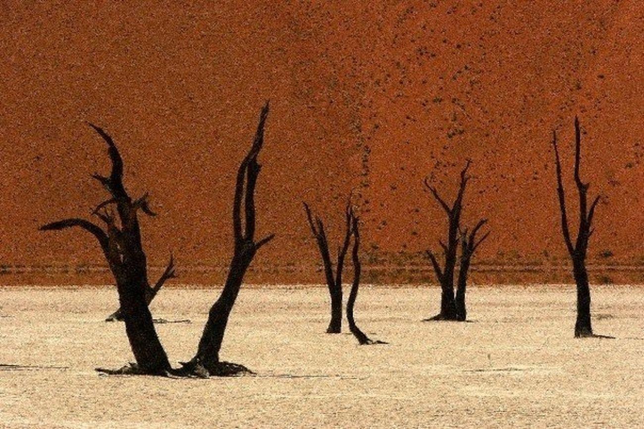 The Explorer - 2014 EyeEm Awards Namibia Desert Travel Dead vlei, Namibia.