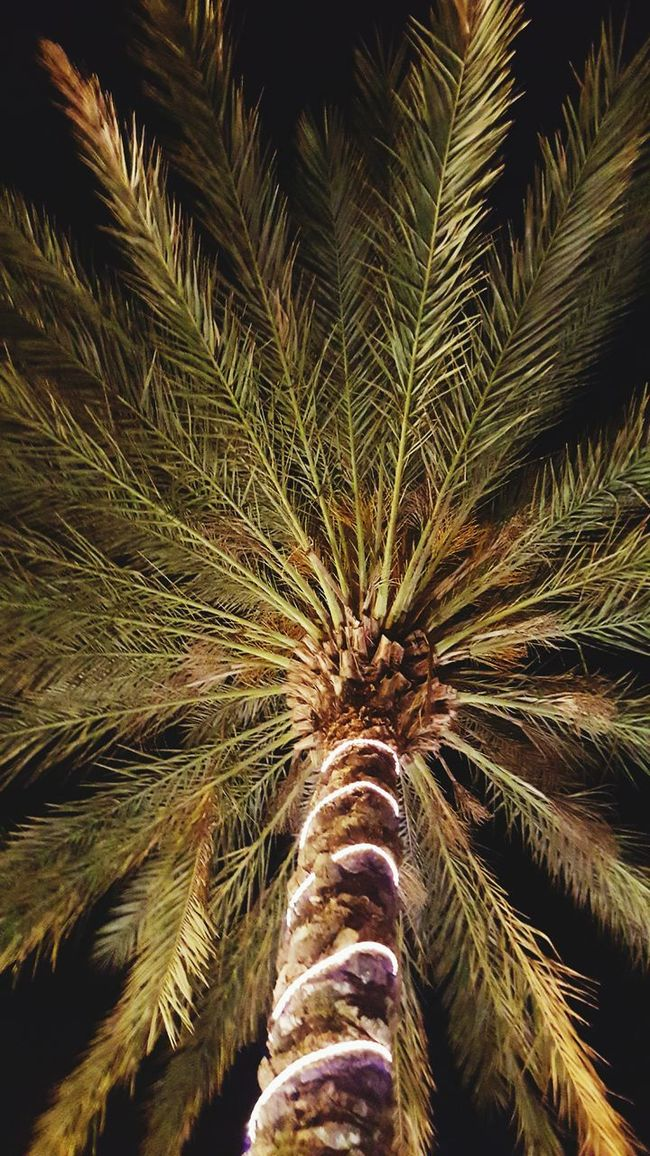 Hanging Out Check This Out Relaxing Palm Trees Trees Enjoying Life Hanging Out Night Night Lights
