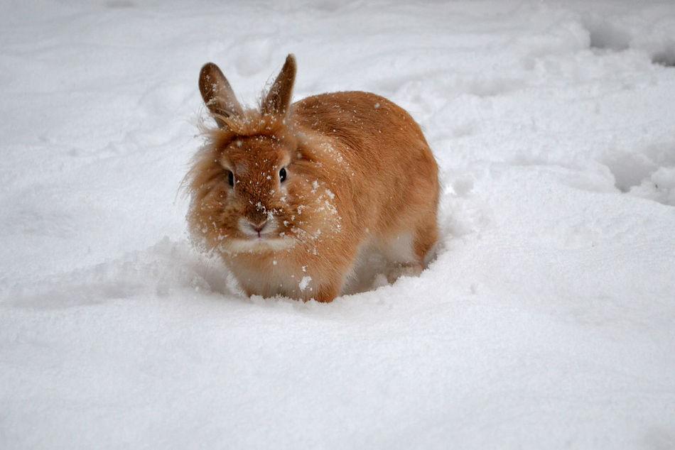 Beautiful stock photos of hasen, Alertness, Animal Themes, Animal Wildlife, Animals In The Wild