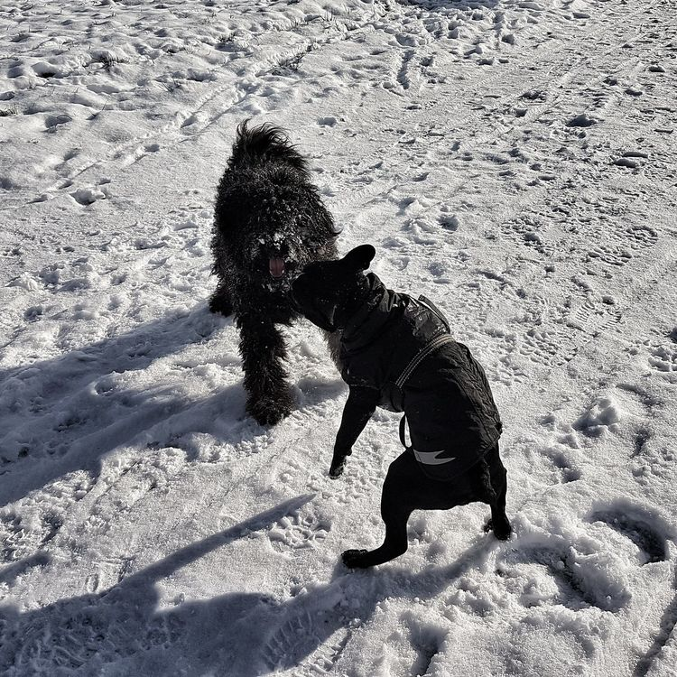 Snow Cold Temperature Winter Dogs Of EyeEm No People Day Pets Nature Outdoors Domestic Animals Animal Themes