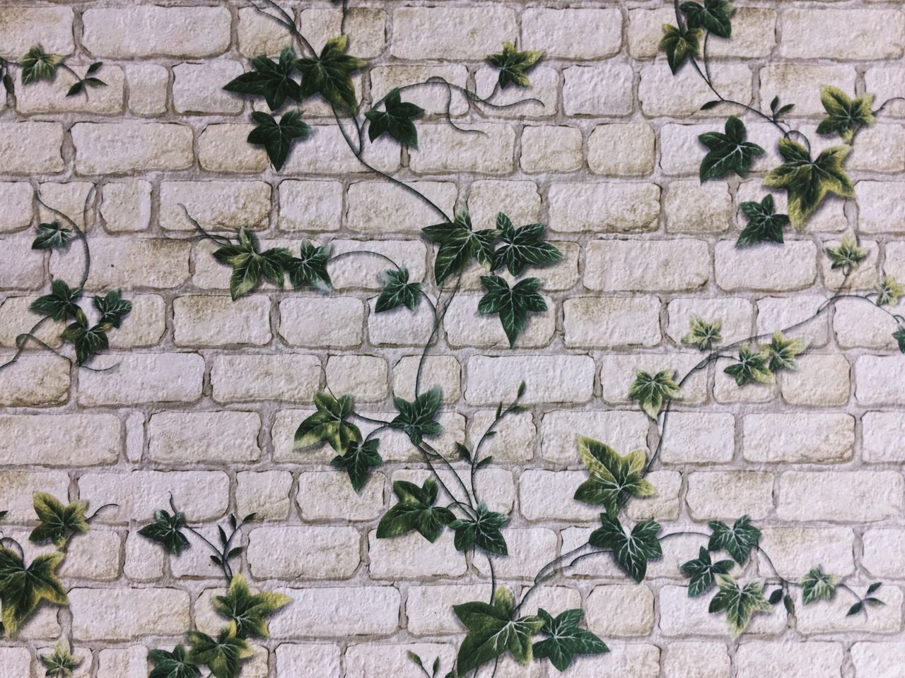 Green ivy painted on wall... Backgrounds Flower Plant Wall Wall Art Wall Painting Wallart Green Ivy Ivy Leaves Ivy Wall Fragility Freshness Petal Blooming Ornamental Painterly Painting Art Design Interior Design Wall Textures Textures Texture Designing