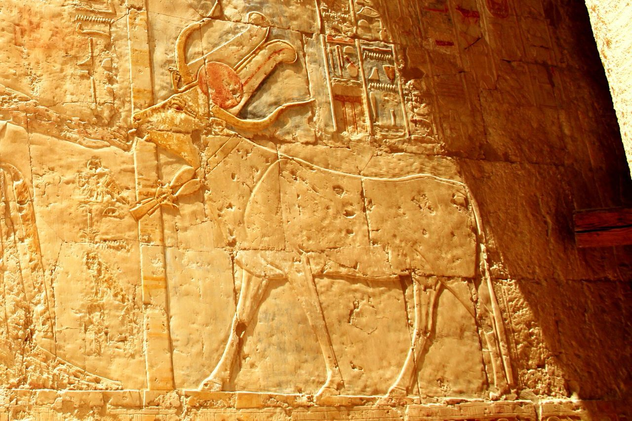 Temple Of Hatshepsut Cow Egypt