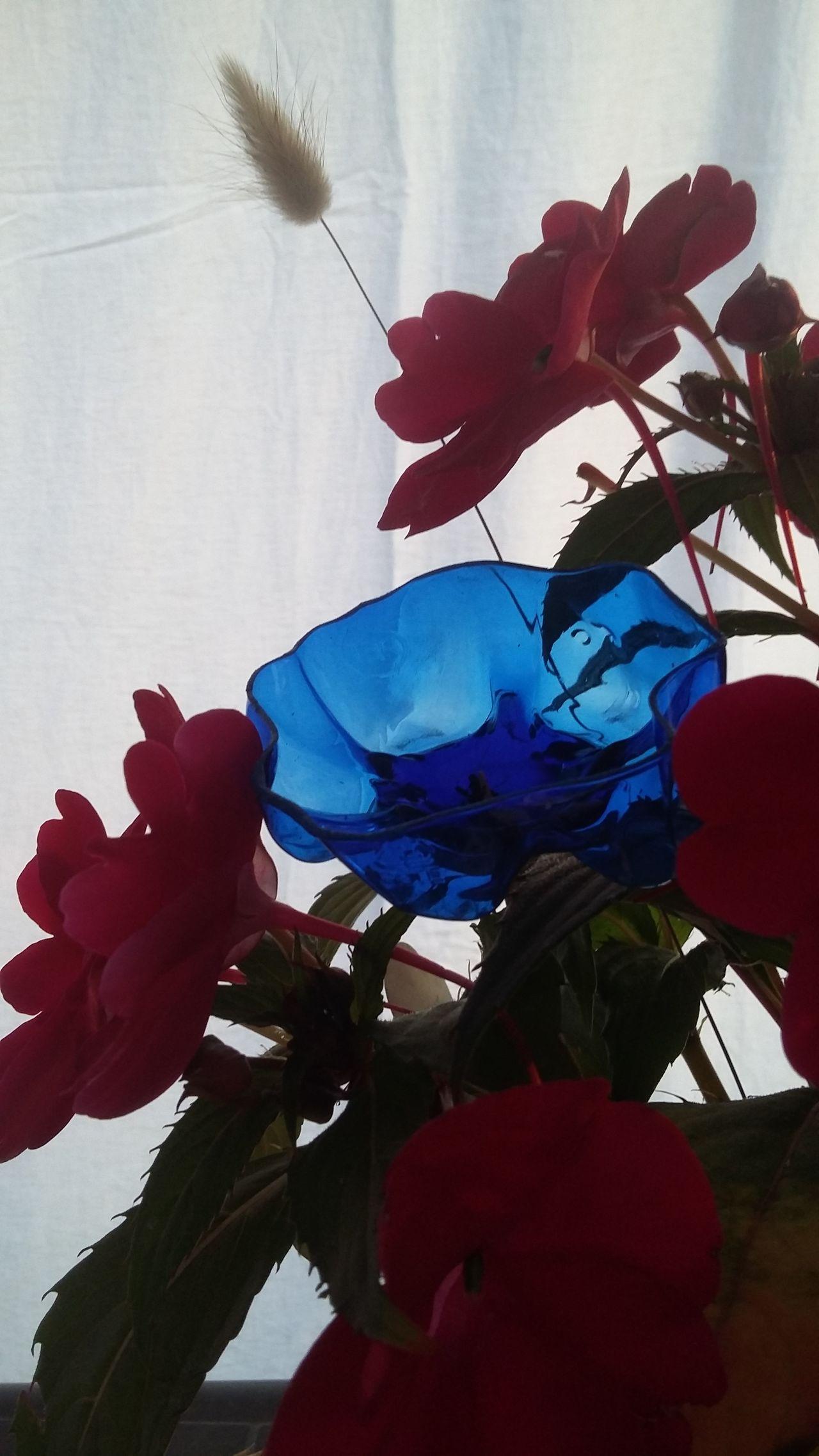 J'aime les fleurs 🌼 Flower Blue Red Nature Close-up Outside Art No People