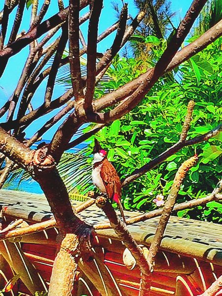 Bird Bird Photography Birds EyeEm Birds Birdwatching Peaceful 🌿☁️🌀