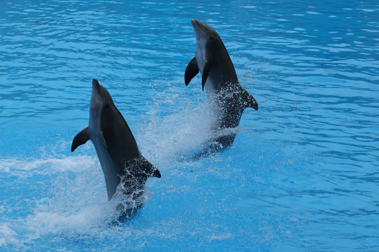 Animal Themes Animals In The Wild Blue Delfin Delfin Show Delfine Dolphin Dolphin Show  Dolphins DolphinShow Motion Nature Sea Sea Life Swimming Two Animals Water Wildlife Two Is Better Than One