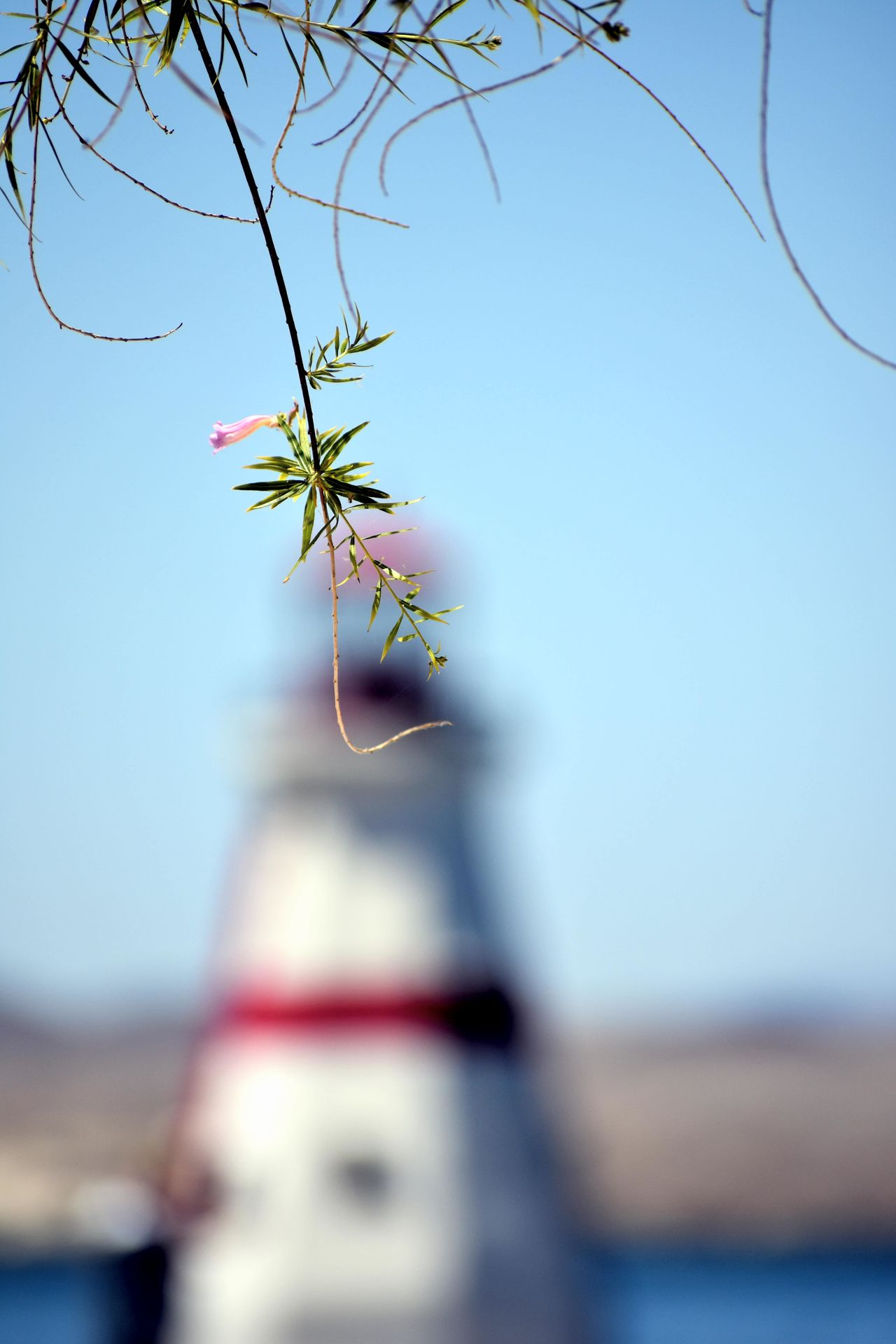Lighthouse Water Sea Outdoors Selective Focus Day Nature No People Nautical Vessel Sky Beach Branch Beauty In Nature Close-up Fragility Clear Sky Tree Photograph UnderSea
