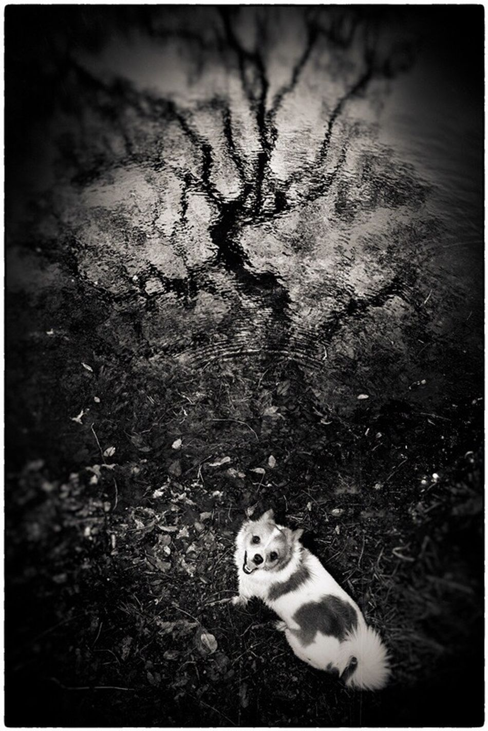 One Animal No People Pets Outdoors Nature Wave Pattern Reflection Invitation Blackandwhite Water Reflections Composition Dogtime Say Hello