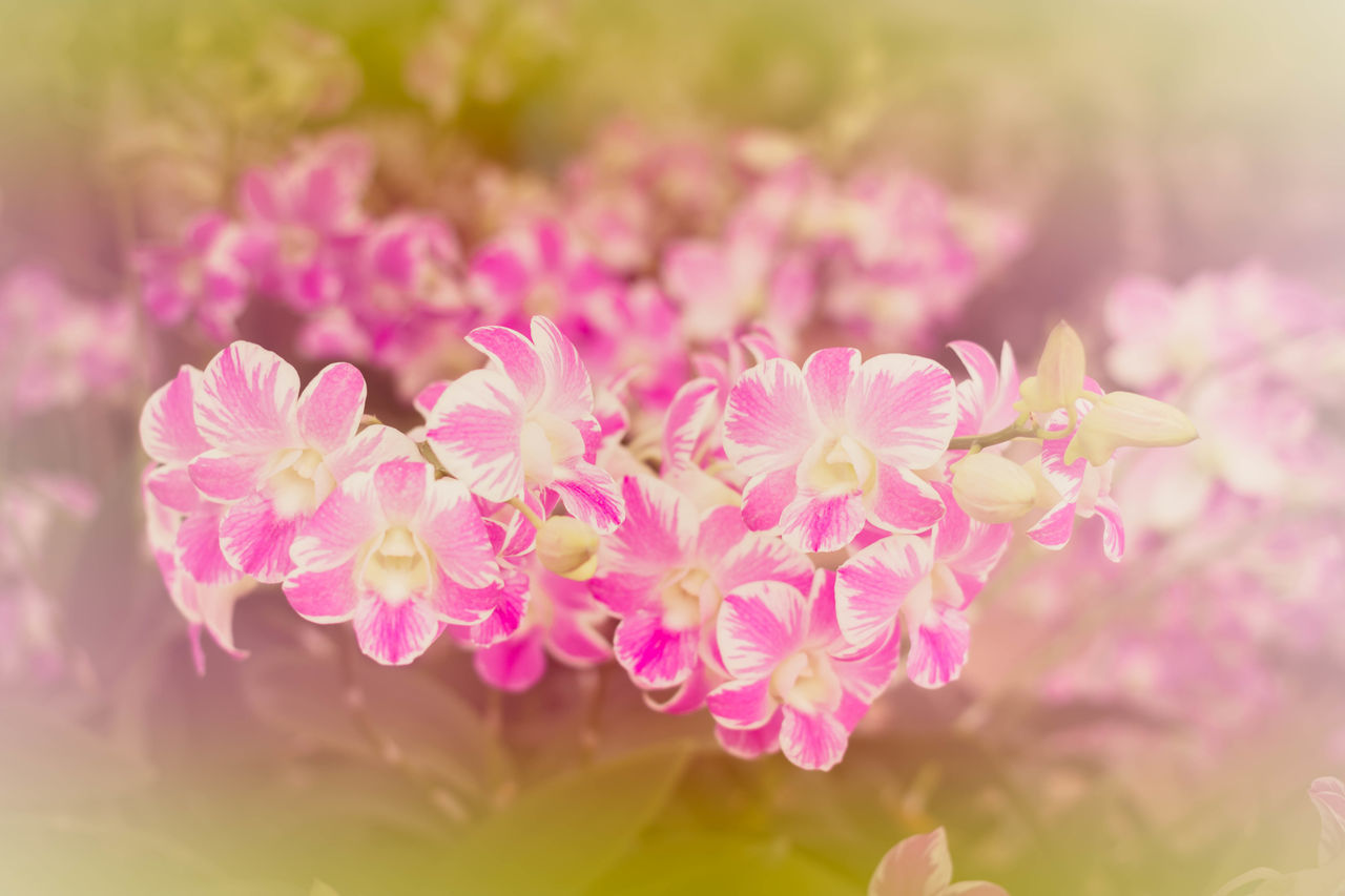 flower, beauty in nature, nature, fragility, plant, petal, growth, freshness, outdoors, day, pink color, no people, flower head, close-up, blooming