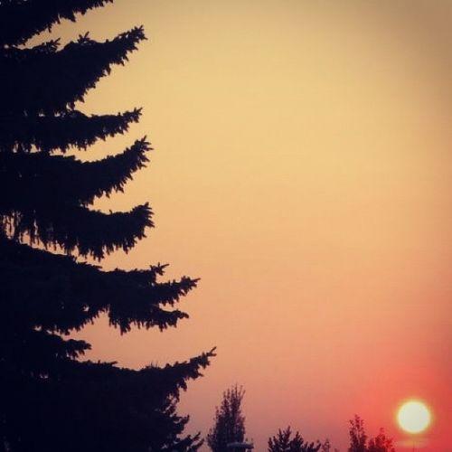 Sunset Orangesky Sun Skyporn Life On Mars