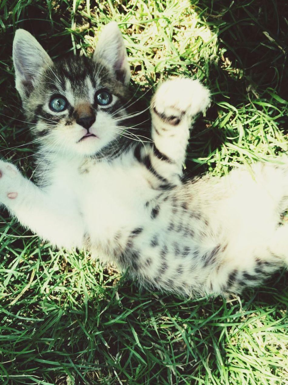Cat♡ Ilovecat Blueseyes Wonderful