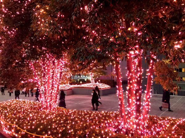 Christmas Shopping Illuminated Tree Night Celebration Real People Christmas Christmas Tree Outdoors Christmas Decoration Christmas Lights Men Women Lifestyles Large Group Of People Motion City