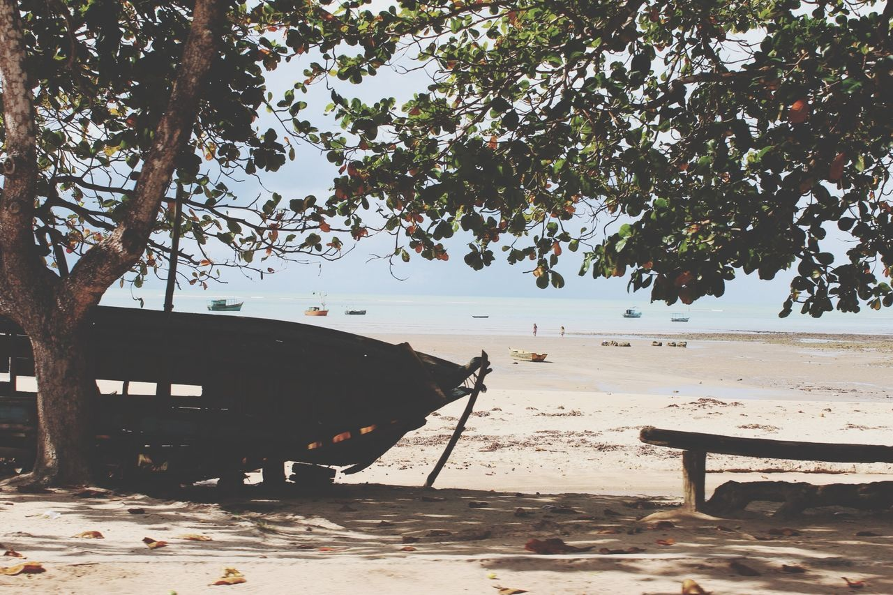 Abandoned Ship On Beach
