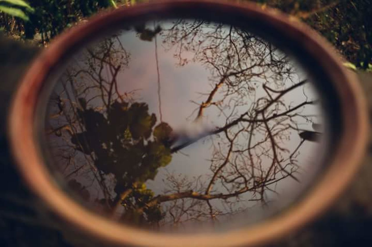 circle, tree, outdoors, no people, nature, grass, day, close-up, refraction, sky, eyeball