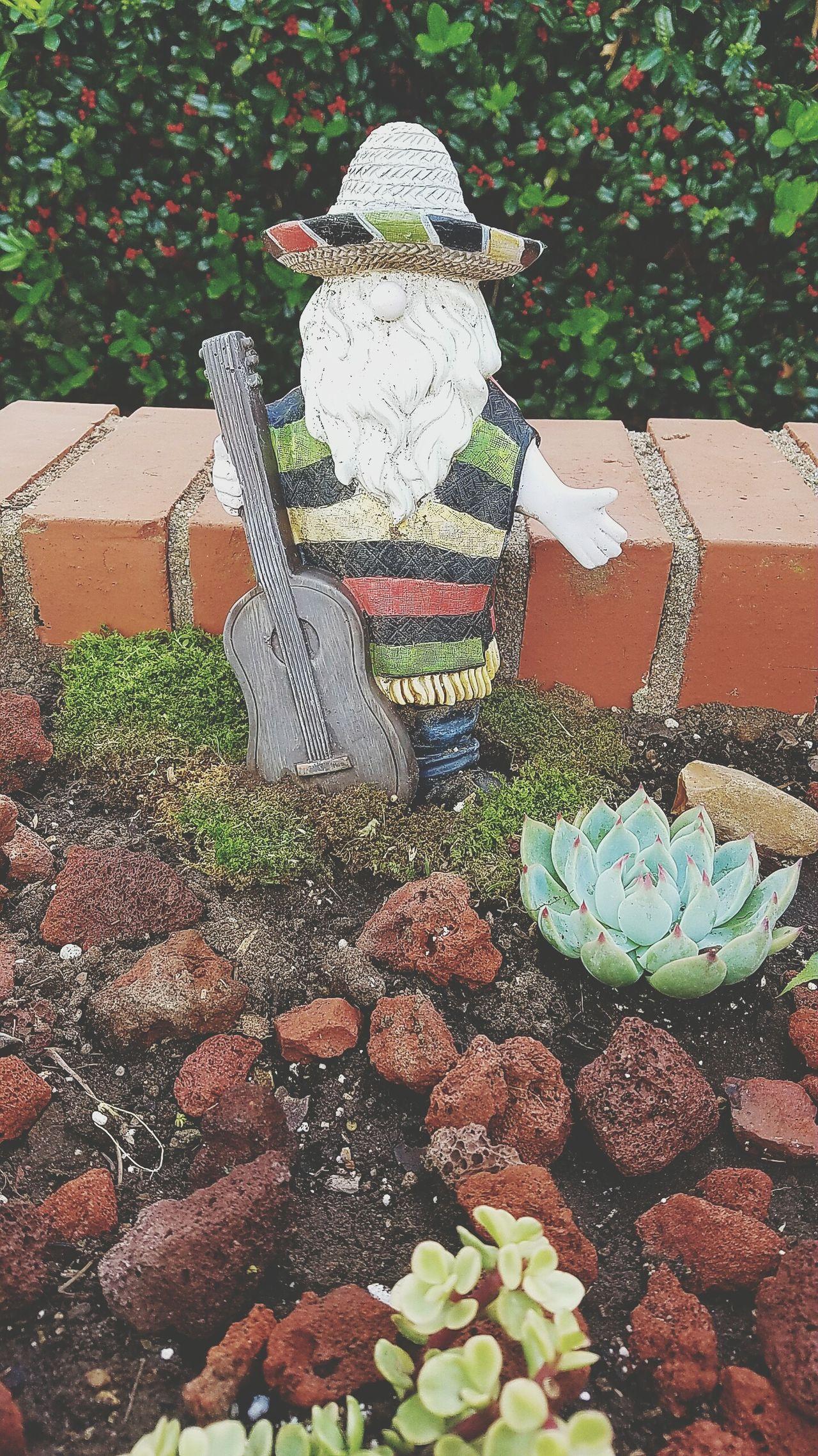 Taking Photos Check This Out Garden Photography Cactusporn Cactus Garden My Cactus Garden