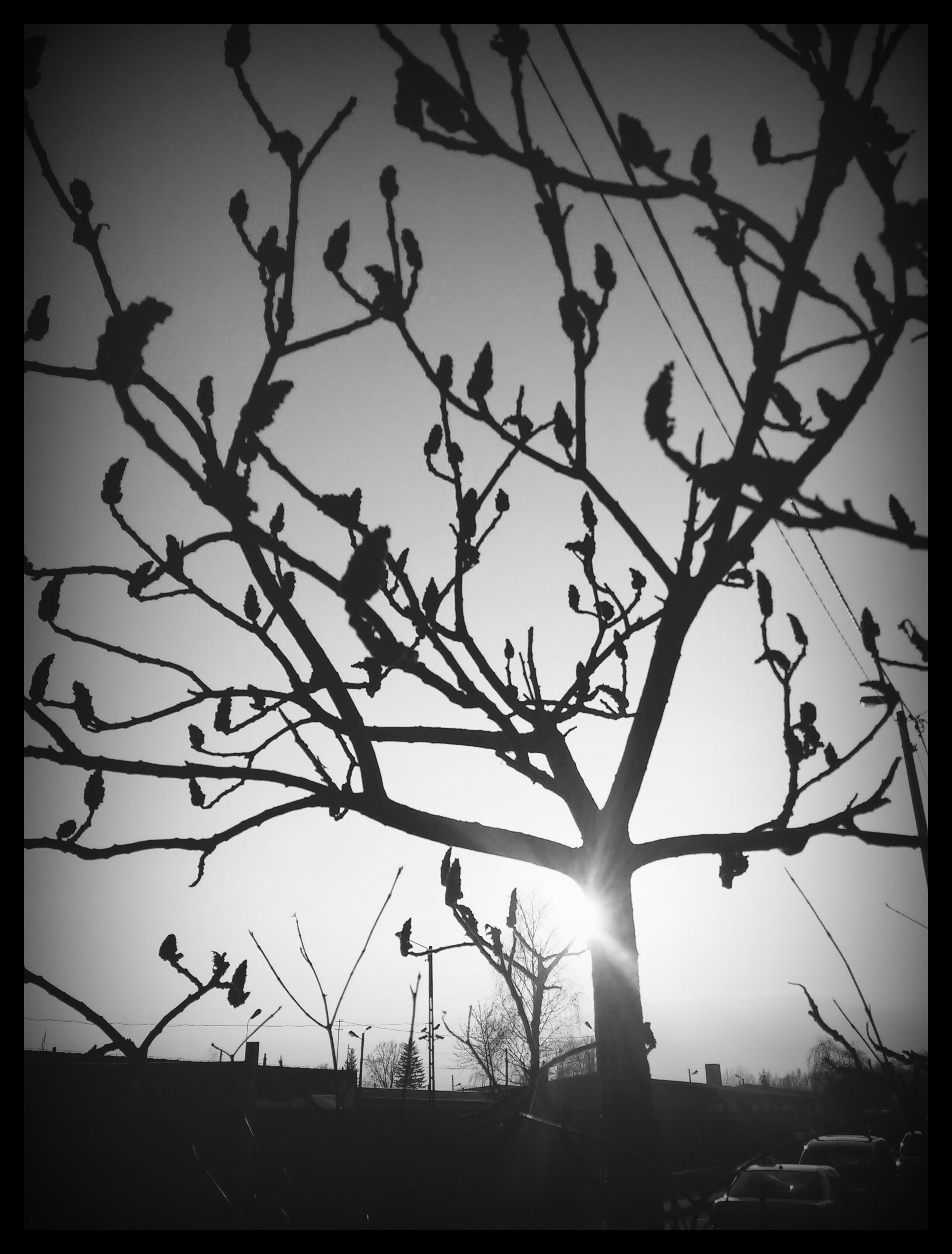 transfer print, low angle view, branch, silhouette, auto post production filter, bare tree, sky, tree, building exterior, built structure, bird, architecture, sunset, clear sky, nature, outdoors, no people, fence, dusk, city