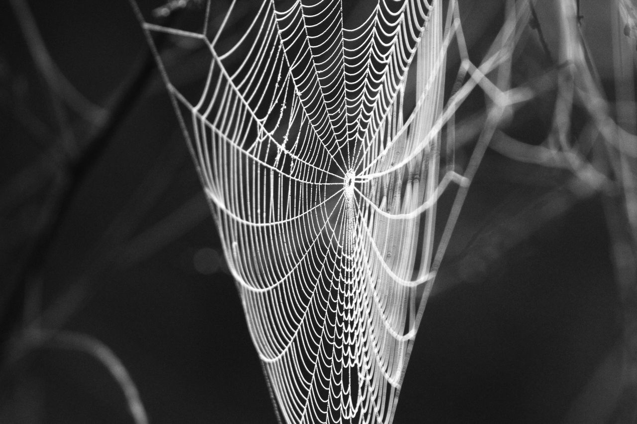Spider Web Spiderweb Black And White Black And White Collection  Pattern Close-up Intricate Details Intricate Nature Abstract Backgrounds Nature_collection Outdoors Beauty In Nature Nature Fragility Cob Web
