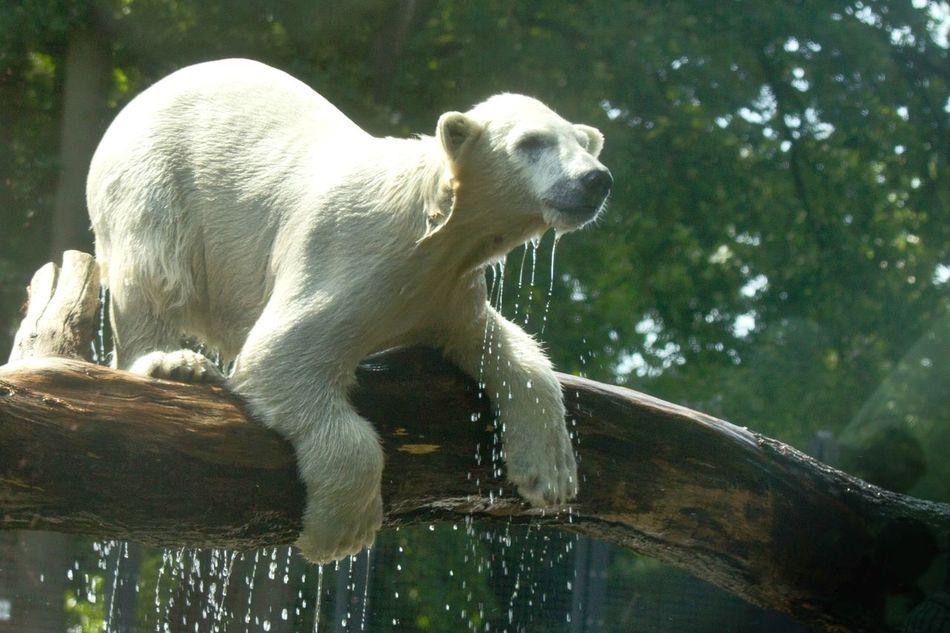Beautiful stock photos of polar bear, Animal Themes, Animals In The Wild, Bear, Beauty In Nature