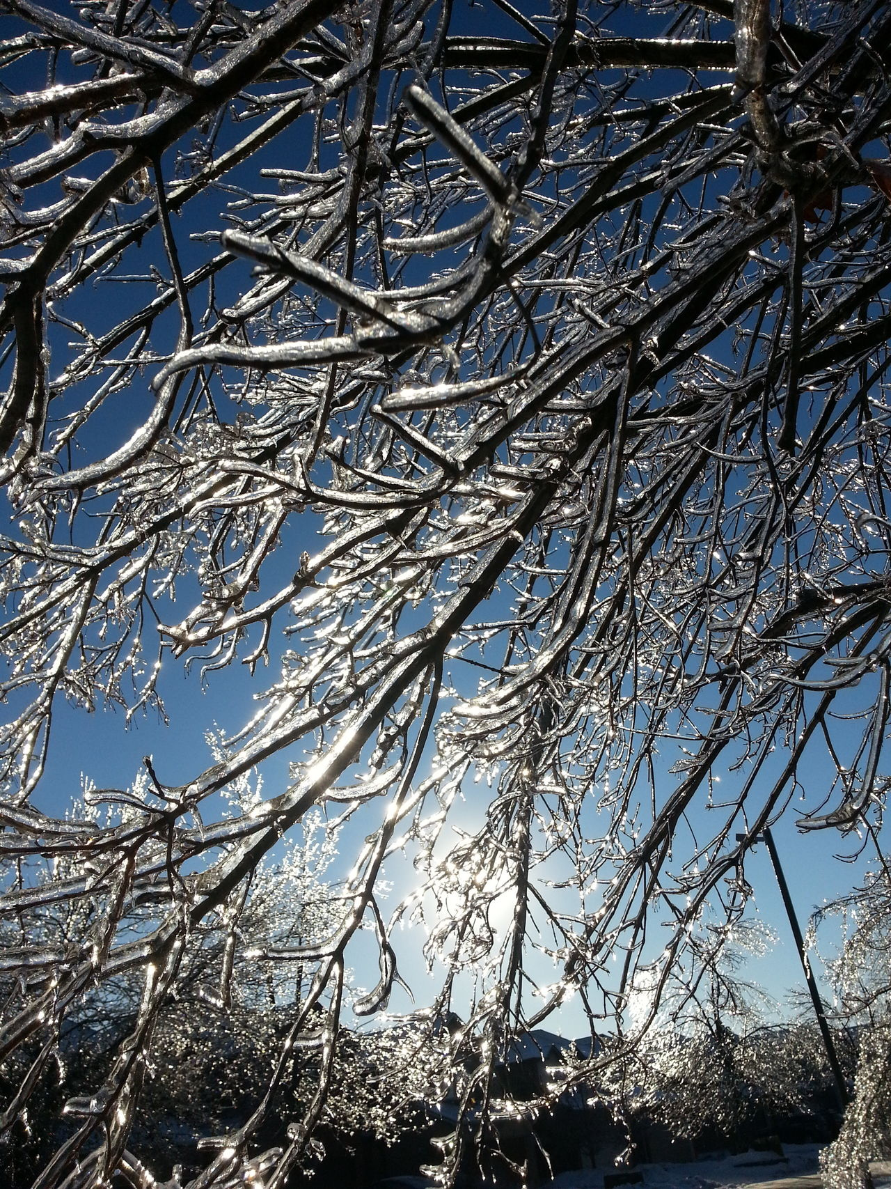 Low Angle View Branch Nature Tree Beauty In Nature Day Backgrounds Ice Iced Winter Full Frame No People Sky Growth Outdoors Clear Sky Close-up Freshness