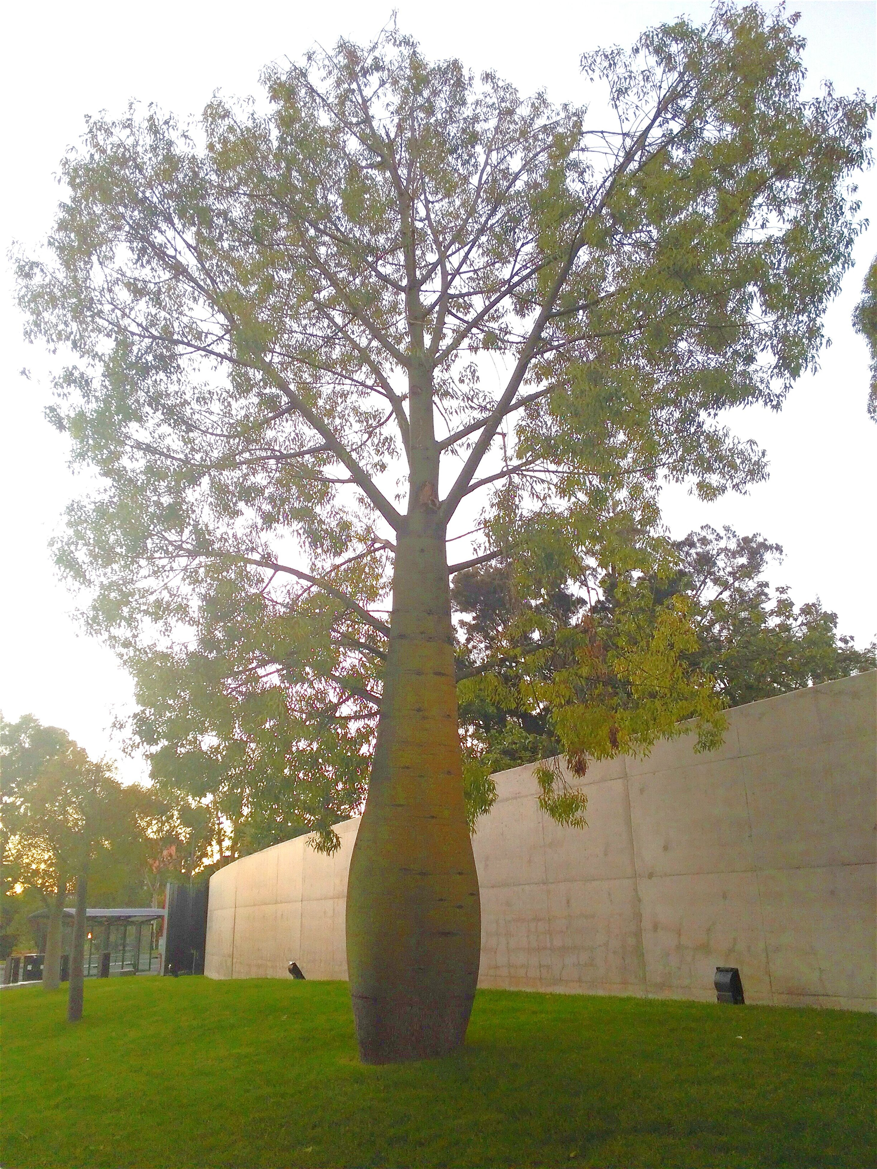 tree, grass, growth, green color, built structure, architecture, building exterior, field, branch, park - man made space, tranquility, sky, nature, clear sky, tree trunk, grassy, lawn, beauty in nature, tranquil scene, sunlight