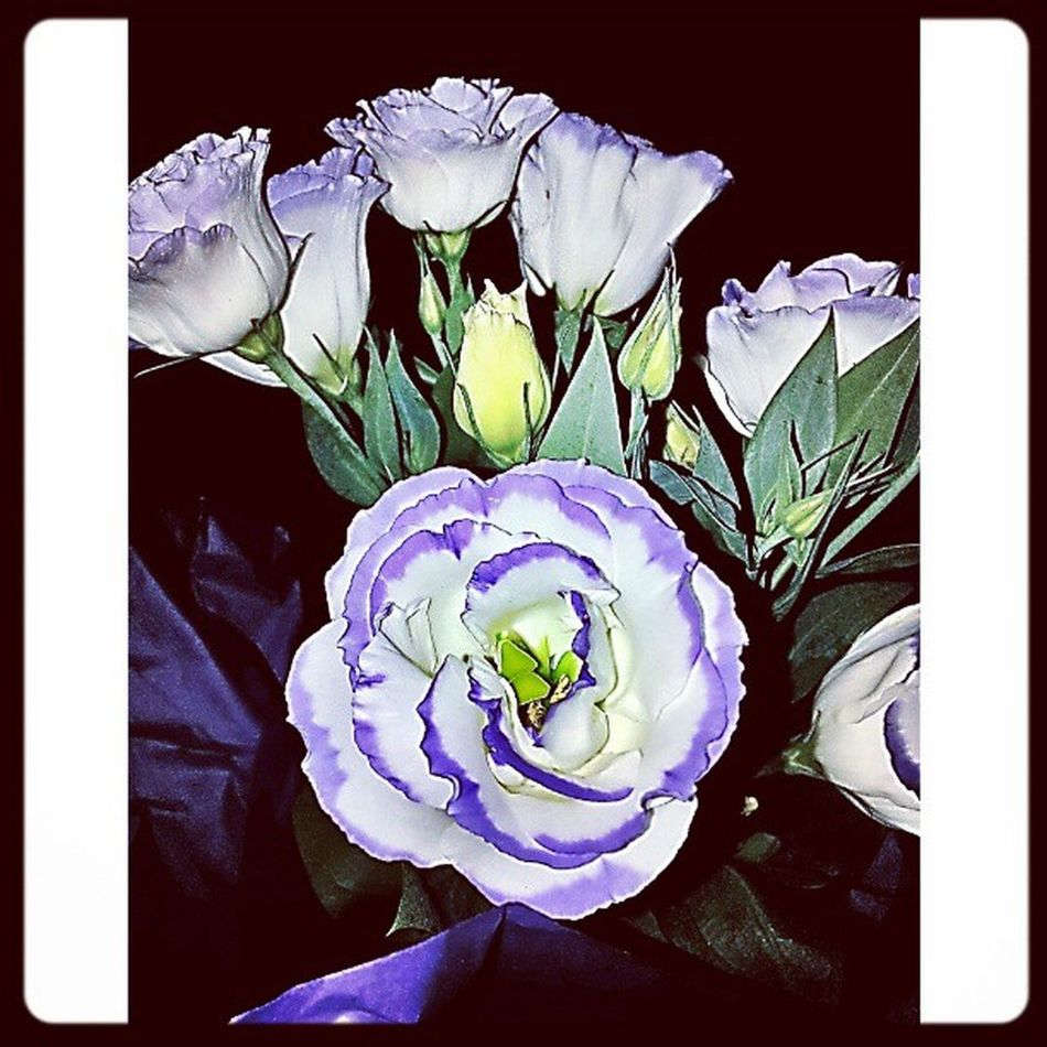 Delicada Nature Flores Flowerlovers Flowers,Plants & Garden Natureza 🐦🌳 Flower Photography