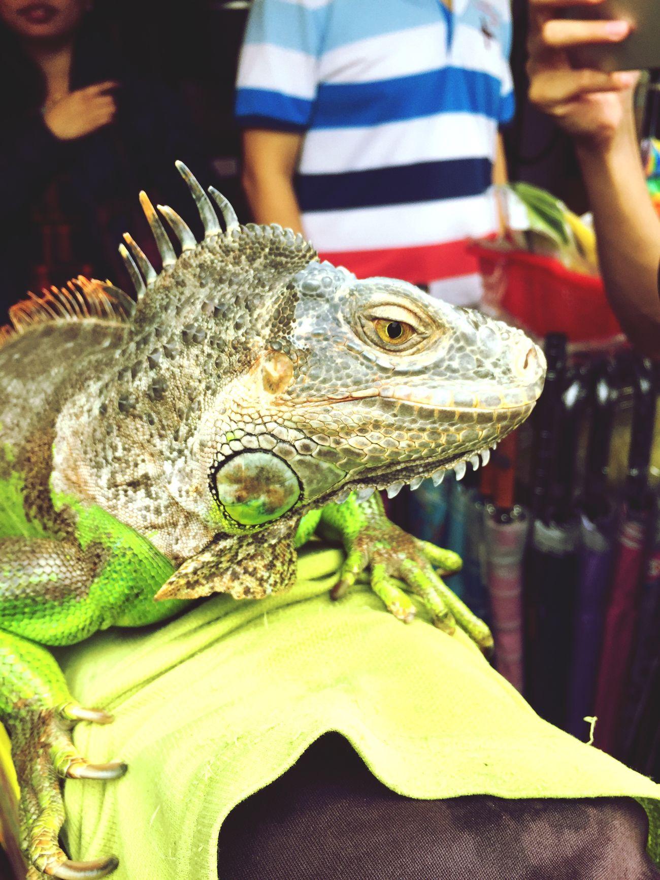 物 Reptile Animal Themes One Animal Green Color Animals In The Wild Animal Wildlife Crocodile Day Iguana Outdoors No People