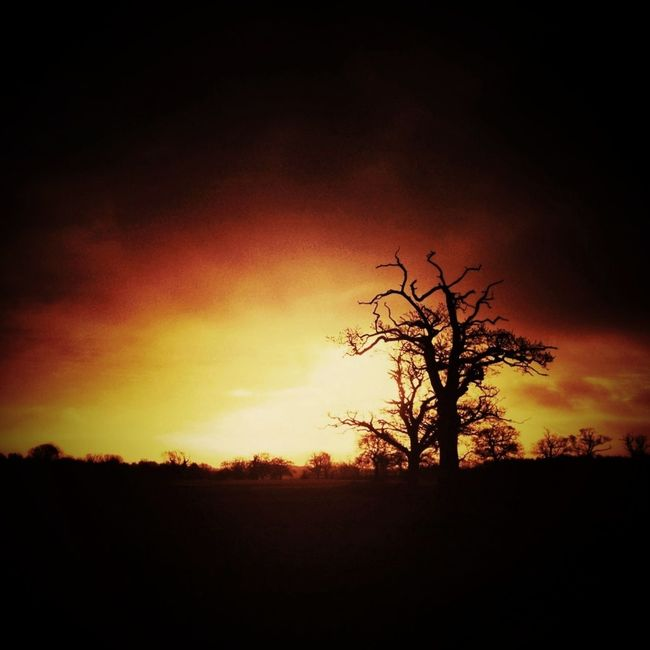 Apparent Silhouette Sunrise Mextures Trees