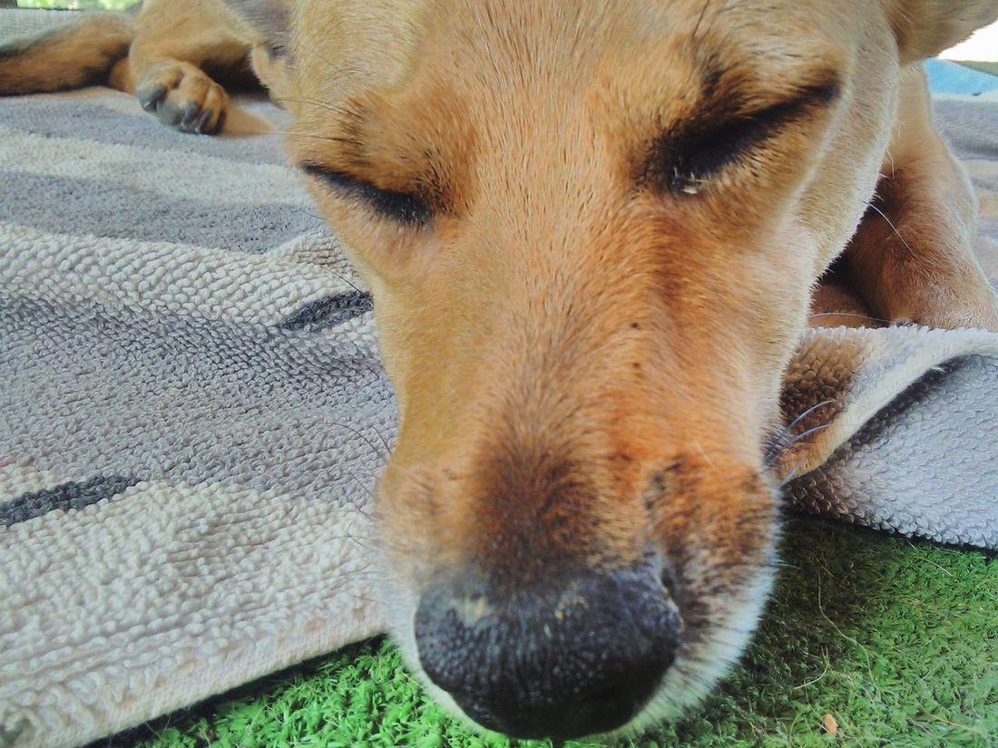Perro Dormir 🇧🇷❤️🙏🏼 Enfoque Perro First Eyeem Photo