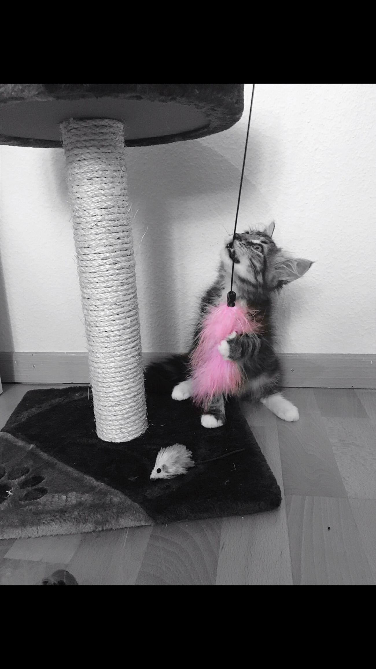 Indoors  No People Cat Cat Lovers Babycat Babyanimals Animal Themes Playing Beautifulanimal Blackandwhite Pink Cat Photography Sweetie Sweetness Sweet Home Sweetcat Pink Color