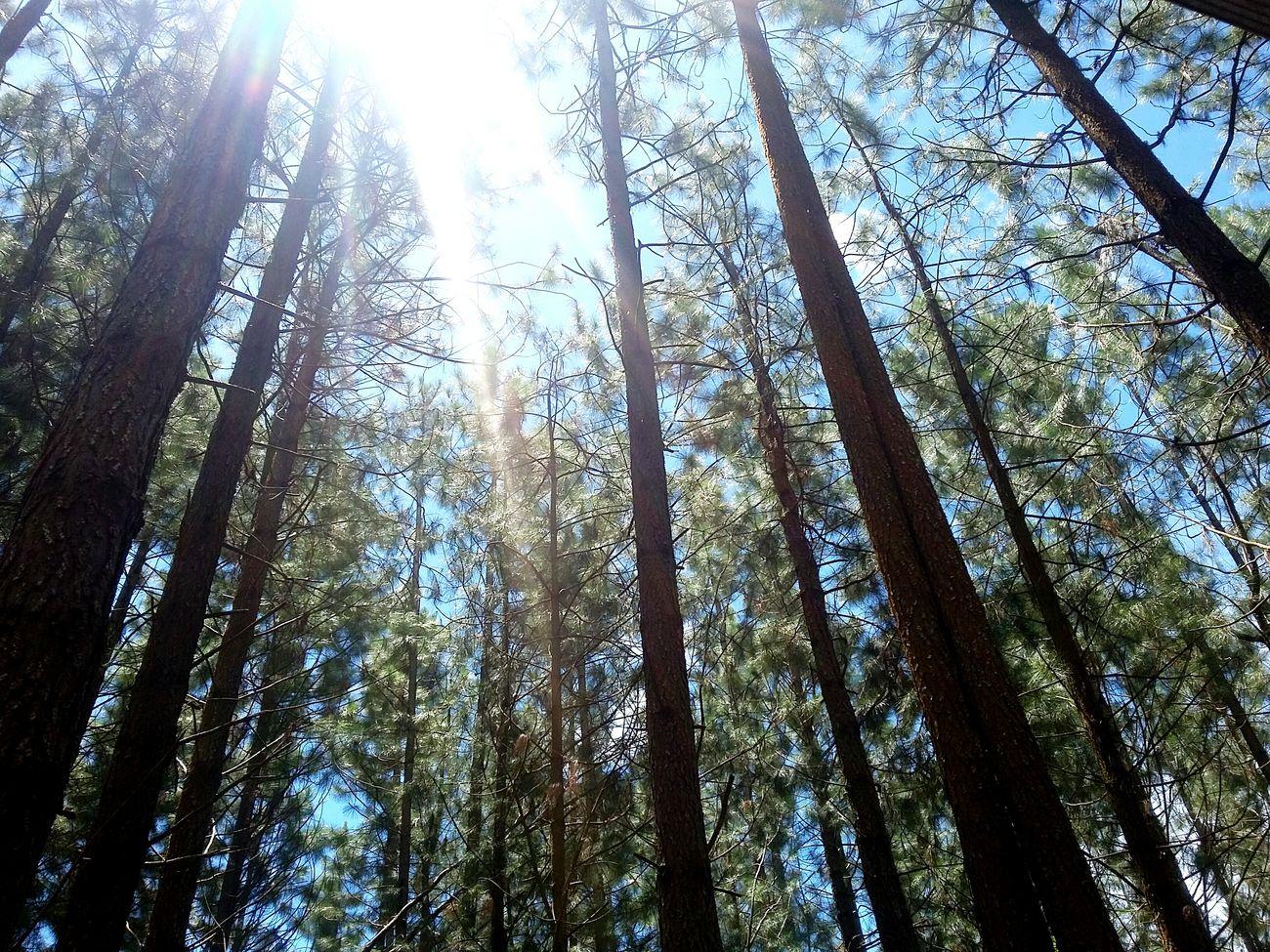 Taking Photos Sunnyday Naturephotography Forest Forestshot EyeemPhilippines Photooftheday Forest Photography
