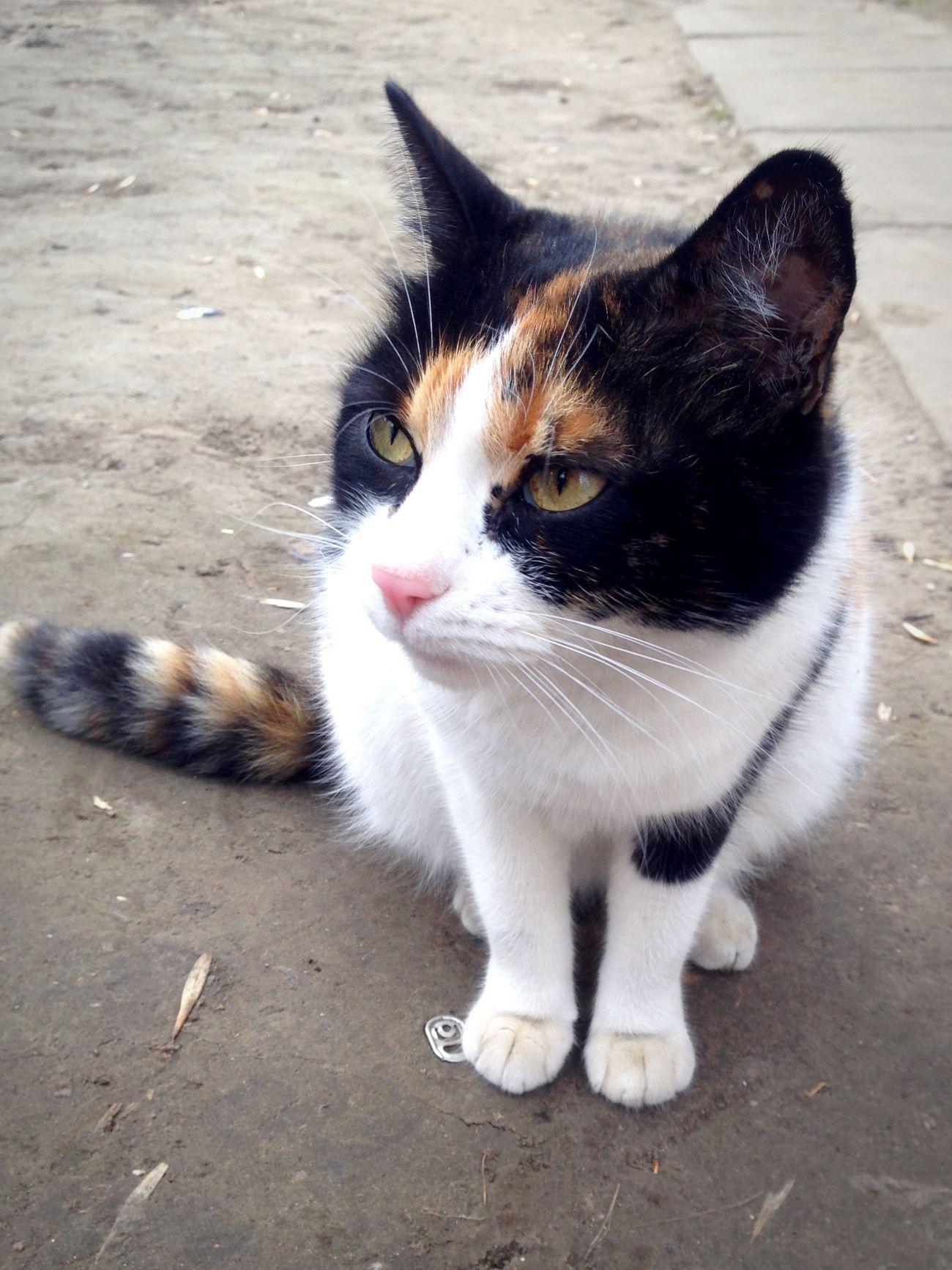 Котик Коты кот котэ Cat Lovers Cats Of EyeEm Cat♡ Cat Cats Cats 🐱 Homeless Cats