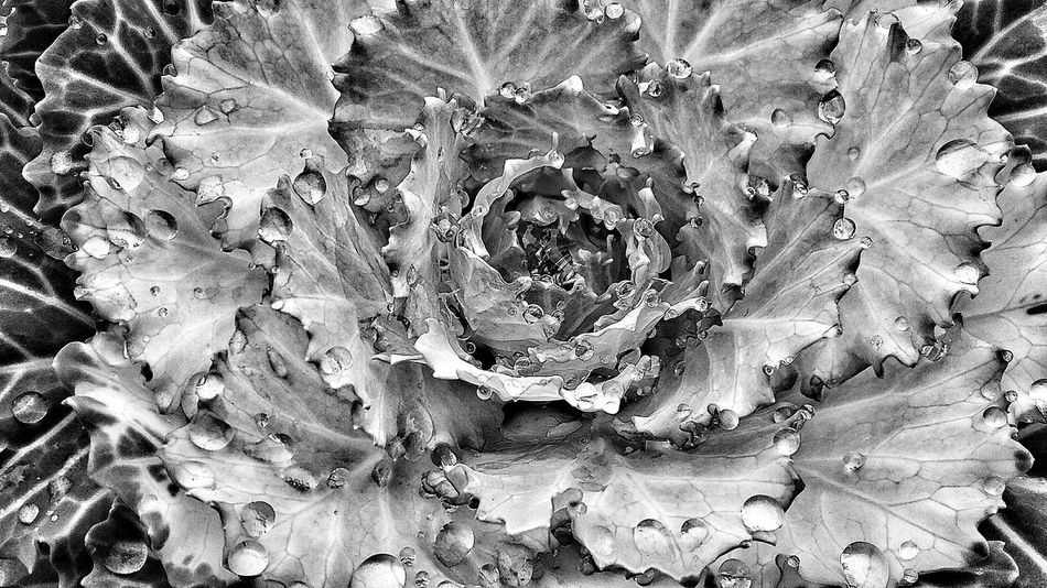Editing...black and white...Nature Full Frame No People Backgrounds Cactus Close-up Growth Beauty In Nature Plant Outdoors Prickly Pear Cactus Day Fragility Wandering Around Flower Head Freshness Abstract Growth Beauty In Nature Artistic Expression Pink Color Flower Artistic Eye Edited My Way Petal