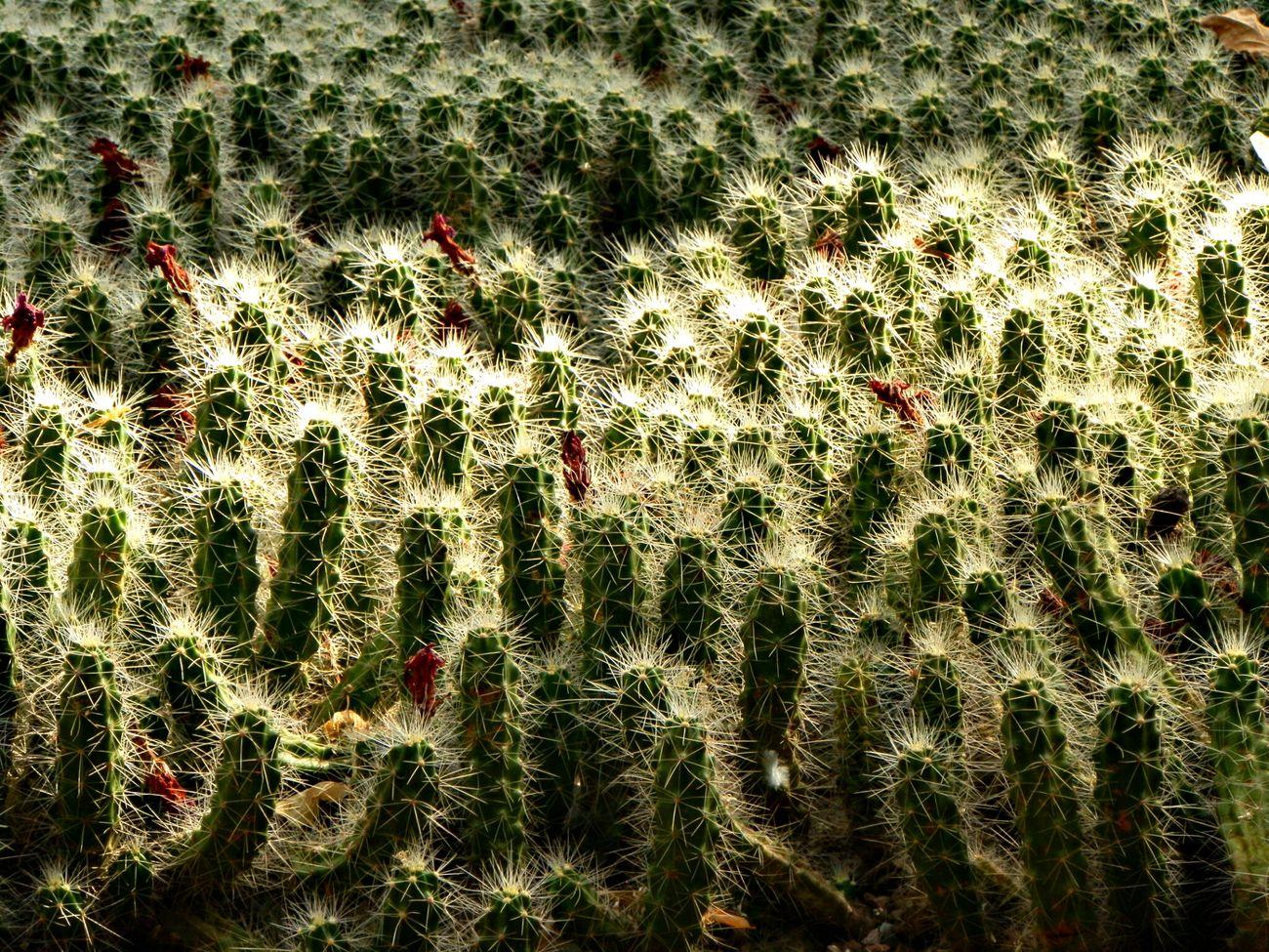 EyeEm Best Shots EyeEm Nature Lover Nature_collection Naturelovers
