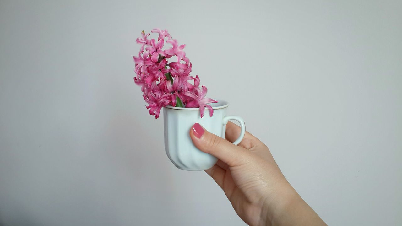 Cup of flowers :) Flowers Showcase March White Background Things I Like Beauty In Nature Holding Pink Flower Full Frame Rosy White Album White And Pink Nail Polish Spring Flowers Nature Flowers In A Vase Simplicity Botany Plants Cup White Cup Human Hand Hand Hands At Work Copy Space Urban Spring Fever