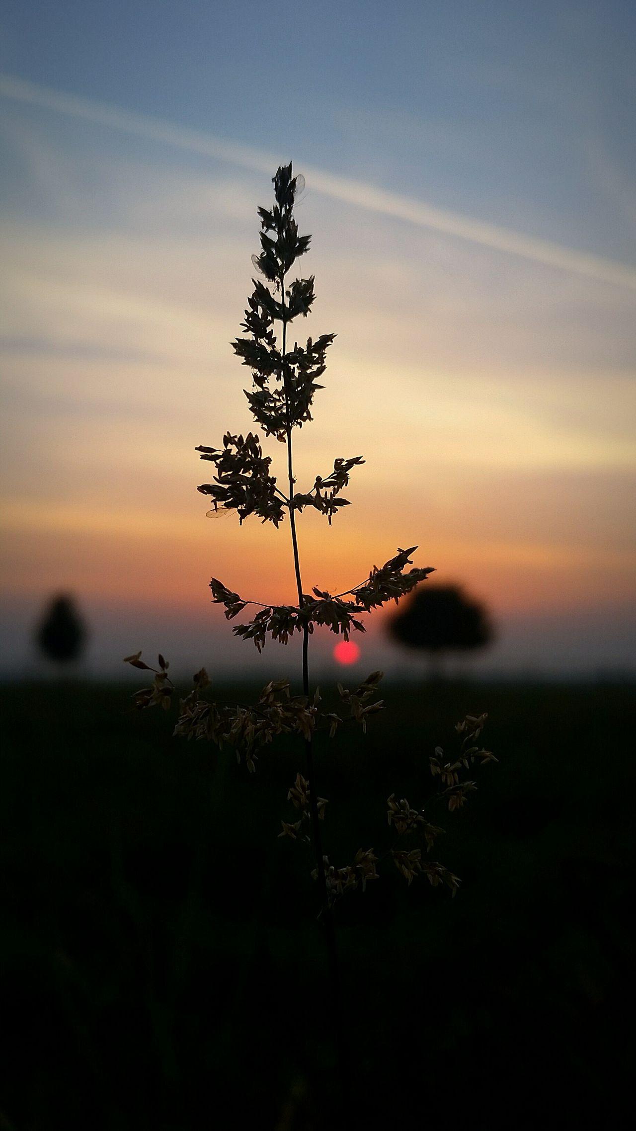 Nature Photography Sunrise Village Germany Photos Plants Pflanzen Bäume Wiese  Perfekt Entspannt Mein Erstes Foto Bin Fuer Konstruktive Kritik Stehts Offen Möchte Von Euch Etwas Lernen