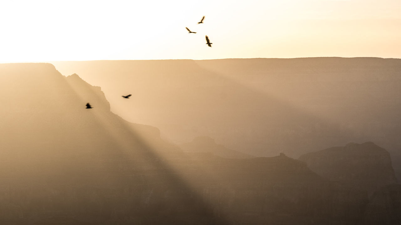 Beautiful stock photos of grand canyon, Animal Themes, Animals In The Wild, Beauty In Nature, Bird
