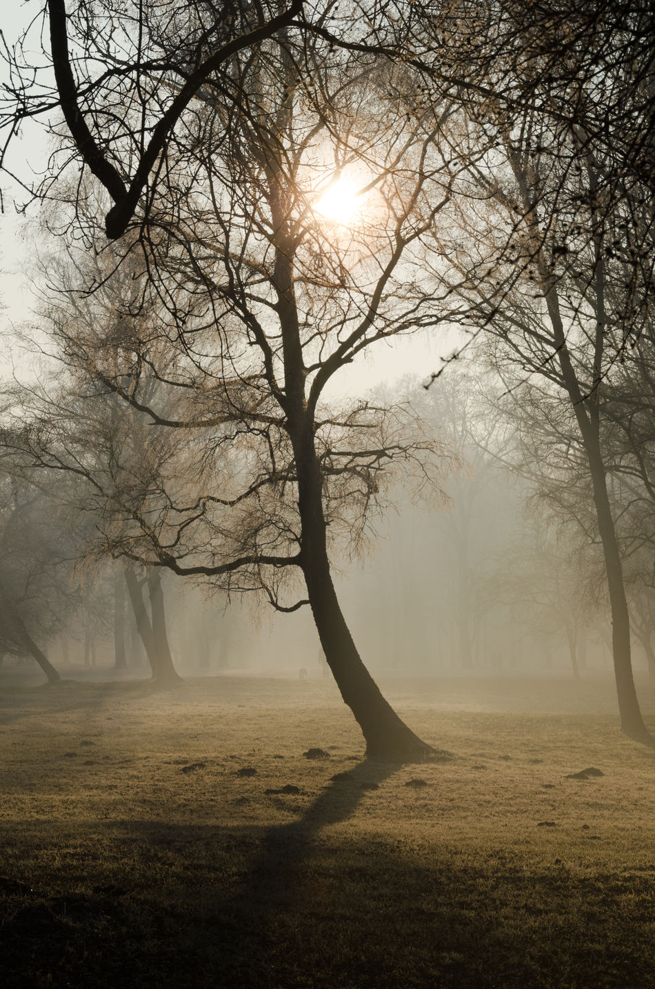 Early morning at Englischer Garten, Munich Autumn Backlight Bare Tree Beauty In Nature Branch Day English Garden Fall Fog Landscape Morning Munich Nature Nature Reserve No People Outdoors Park Silhouette Smog Sun Tranquil Scene Tranquility Tree Walking Around Winter