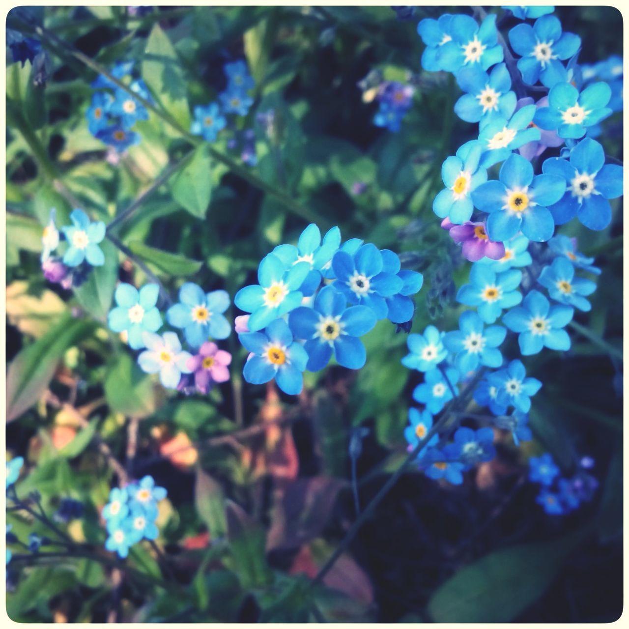 Hallerbos Flowers Hanging Out Enjoying Life Hugging A Tree Relaxing Taking Photos Walking Around