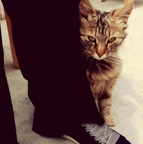 Gelen diğer kedileri kıskandı. Ondan başka kedi sevmiycekmişim.😍😘🐱🐈 Kedici Kediaşkı Cat Cats 🐱 Kedicik 🐈 Hayvansevenler Kediler Kedigözü Photography Animal Photo Of The Day Cat Lovers Myphoto MyPhotography Cat♡ Kediseverler Kedi Kiskanç