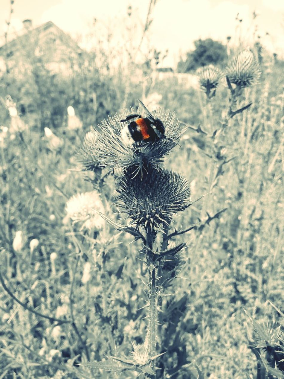 Bumblebee Ukraine 💙💛 Україна шмель