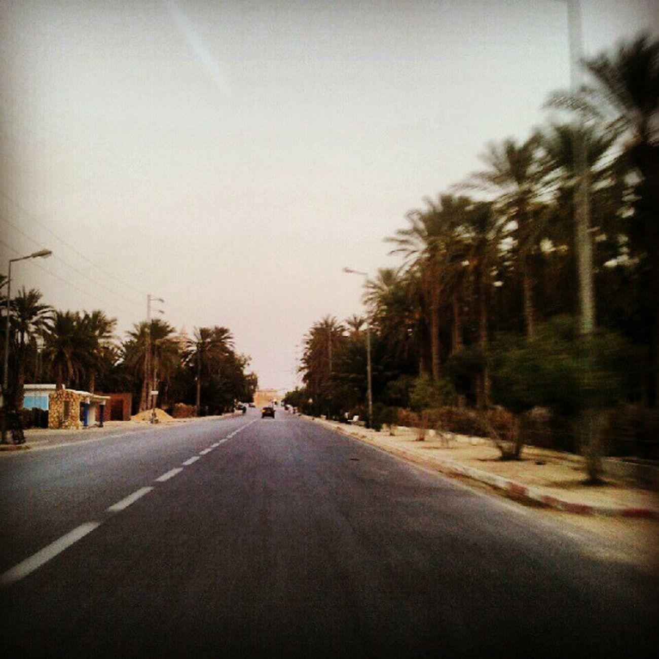 Jemna Oisis Palmtree Tunisie Tunisia