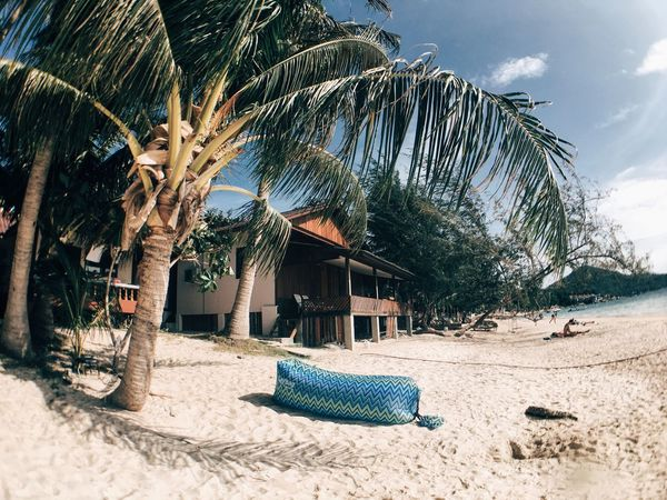 Our little Paradise. Thailand Koh Tao Travel Journey Beach Palm Tree Tropical Climate Nature
