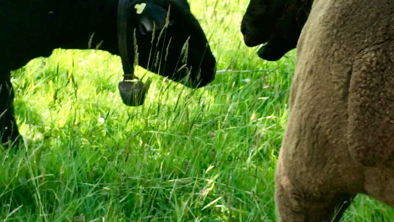 grass, no people, green color, field, day, animal themes, nature, outdoors, mammal, close-up