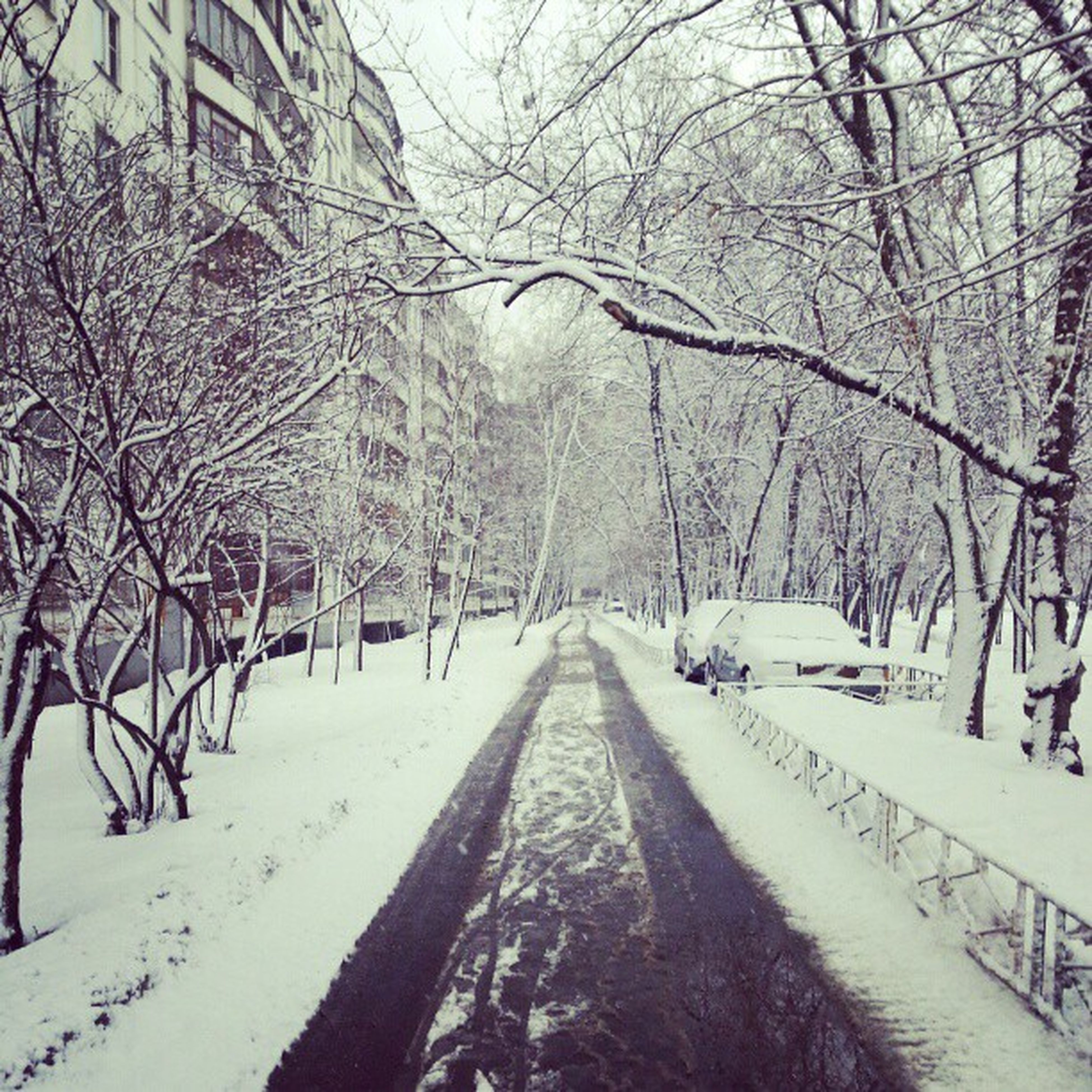 snow, winter, cold temperature, tree, the way forward, season, bare tree, weather, covering, transportation, diminishing perspective, road, branch, vanishing point, nature, treelined, tranquil scene, white color, street, tranquility