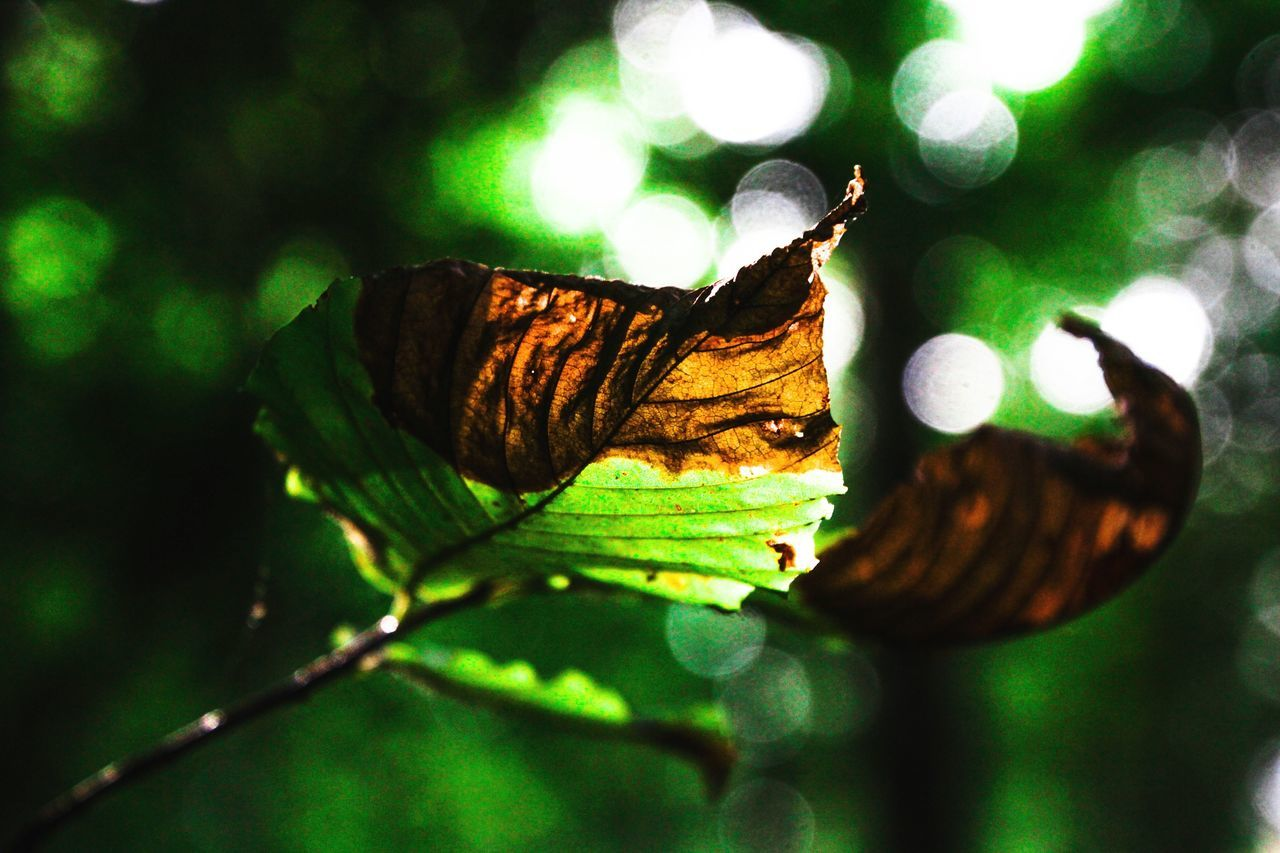 one animal, animal themes, animals in the wild, insect, no people, close-up, green color, nature, butterfly - insect, animal wildlife, day, leaf, outdoors, beauty in nature, tree